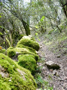 Walk in the Cevennes - Mialet