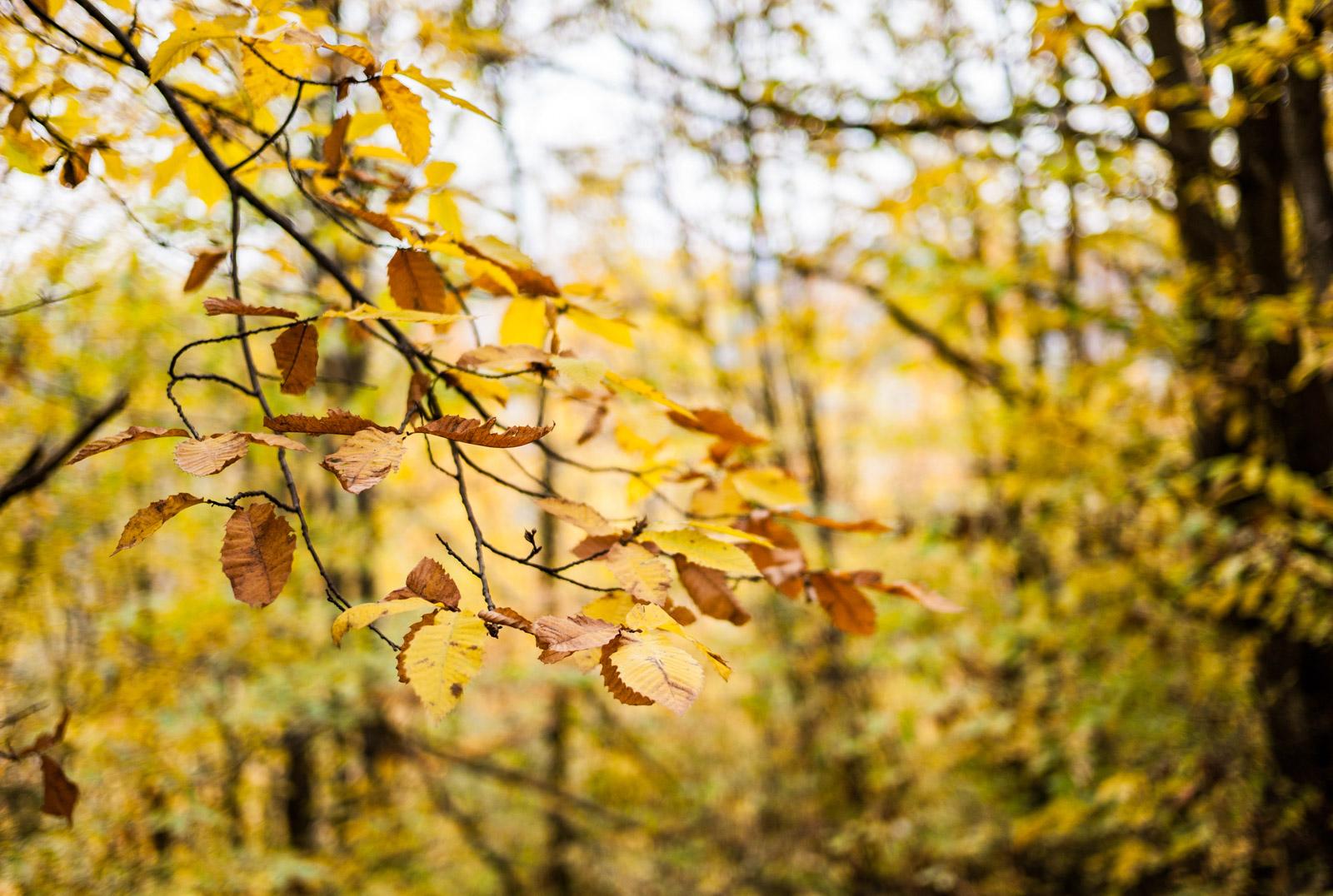Les paysages d'automne de nos Cévennes