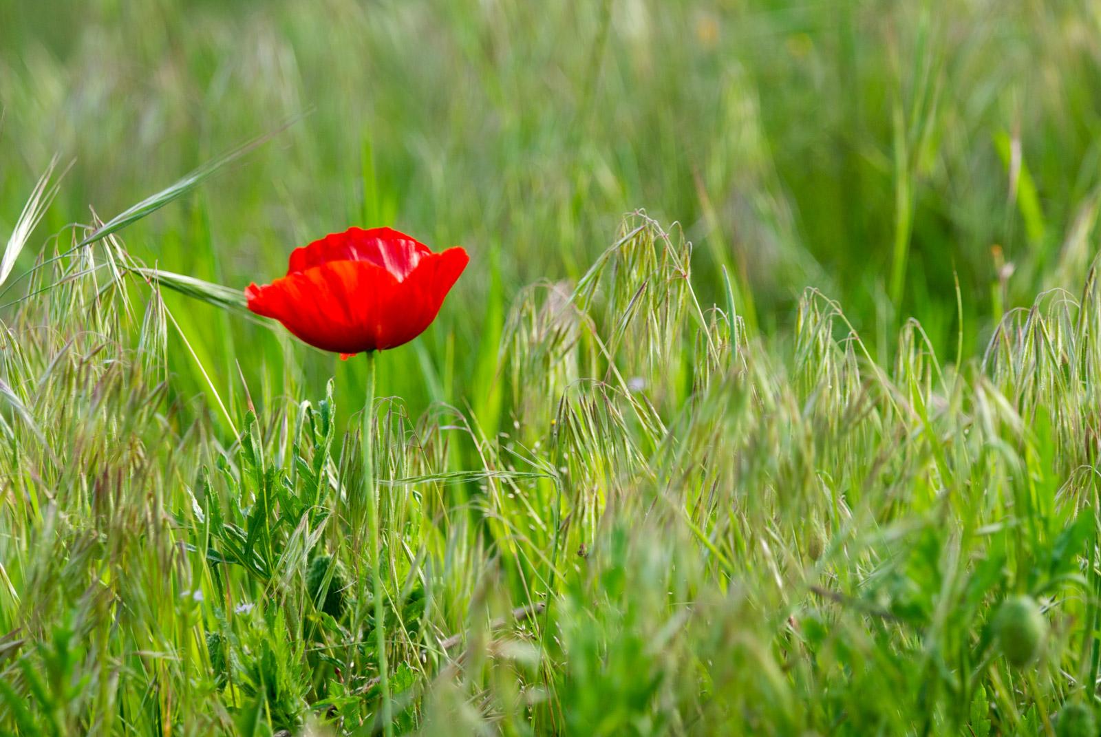 Profitez du printemps au Pradinas au cœur des Cévennes