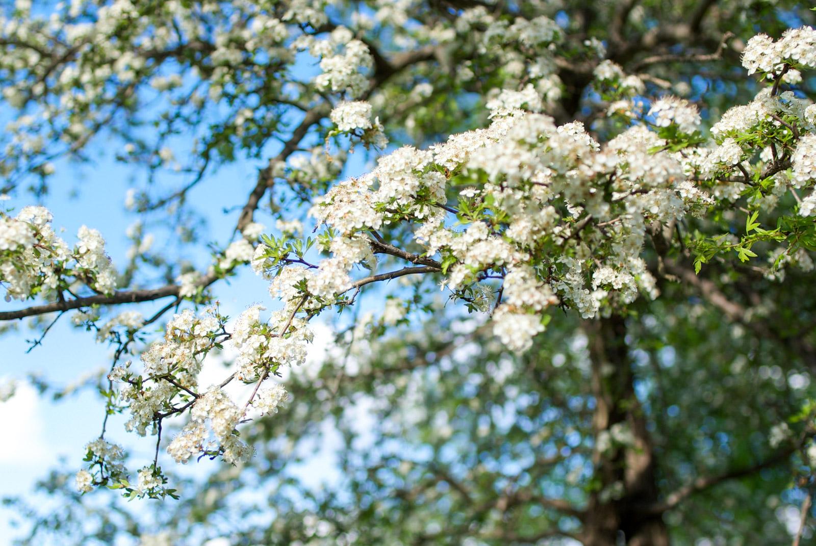 Le printemps est là au Pradinas